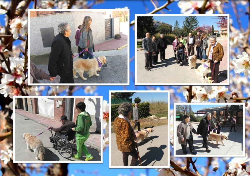 passeig gossos-001 (3)